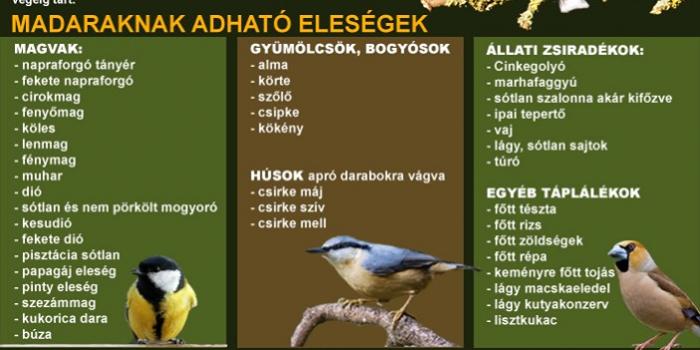 Segítsünk a madarakon